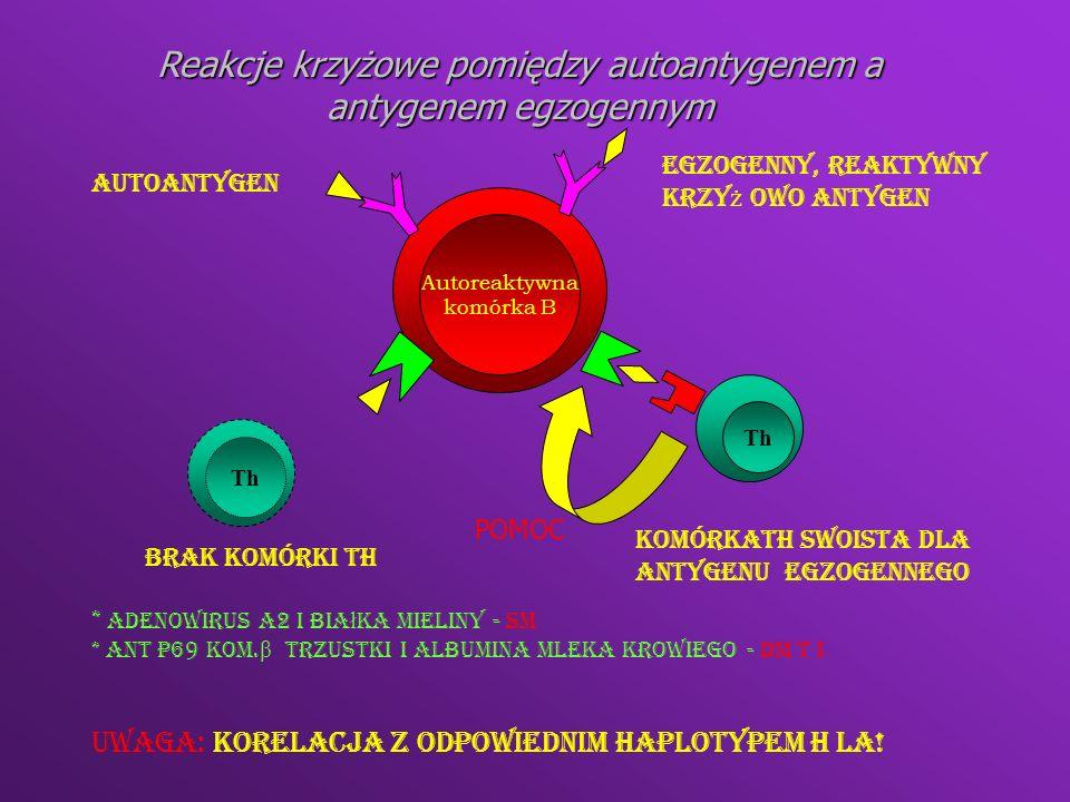 Th1Th2 IFNγ Aktywacja makrofagów IL4 IL5 IL10 B eozynofil Komórka tuczna Dewiacja immunologiczna RZS SM DM t I SLE miastenia gravis
