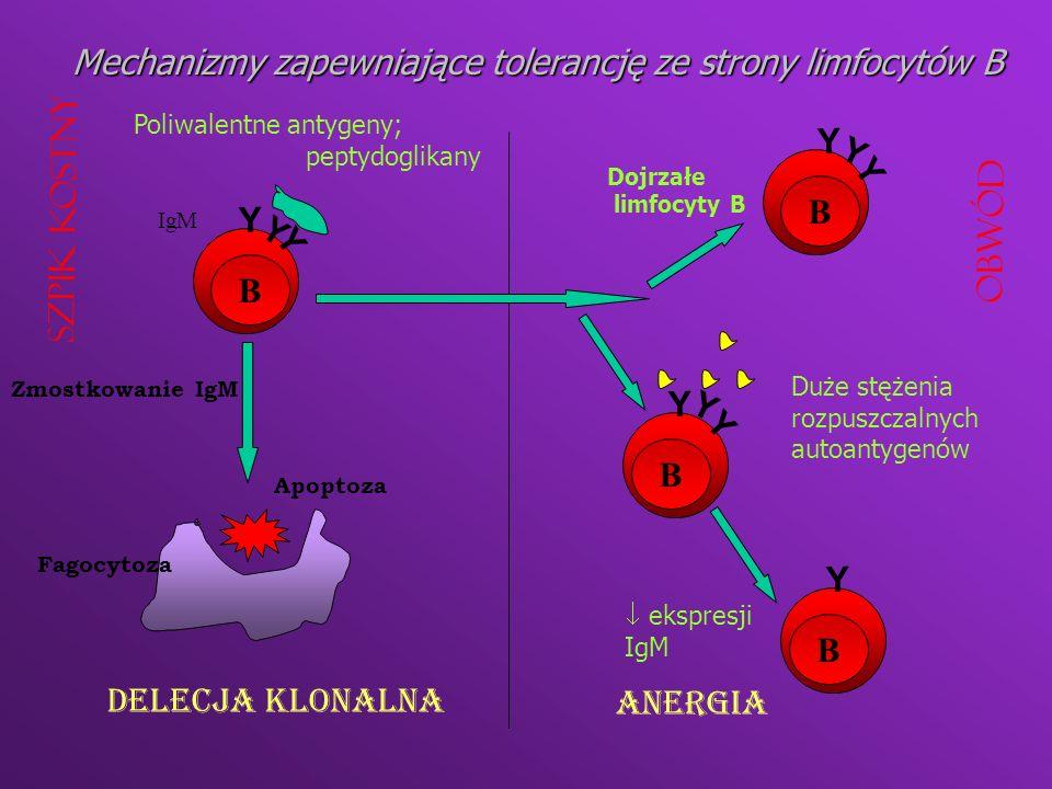 SEKWESTRACJA AUTOANTYGENU Anatomiczna Molekularna