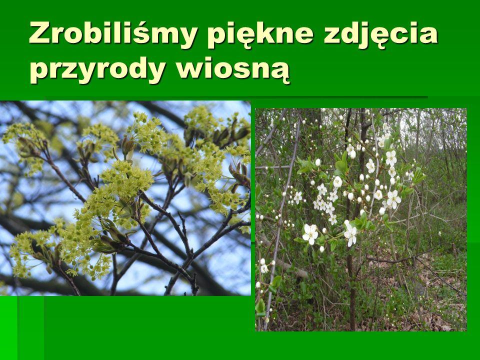 Zrobiliśmy piękne zdjęcia przyrody wiosną