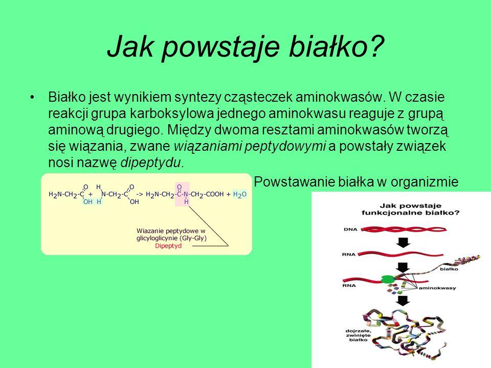 Jak powstaje białko? Białko jest wynikiem syntezy cząsteczek aminokwasów. W czasie reakcji grupa karboksylowa jednego aminokwasu reaguje z grupą amino