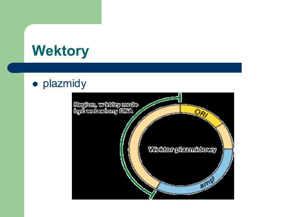 Aby zmodyfikować organizm potrzebujemy DNA, enzymów i wektora WEKTOR - cząsteczka DNA mogąca być nośnikiem interesującego nas kawałka DNA, która posia