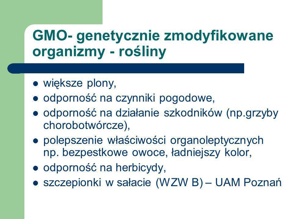 GMO- genetycznie zmodyfikowane organizmy - bakterie Bakterie GMO wykorzystuje się do produkcji: - ludzkiej insuliny, (wcześniej z trzustek cielęcych –