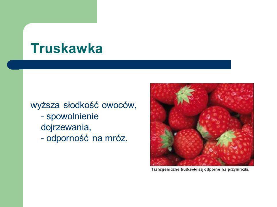 Pomidory - spowolnienie dojrzewania, większa trwałość - większa zawartość suchej masy, - poprawa smaku, - intensywniejsza barwa, cieńsza skórka.
