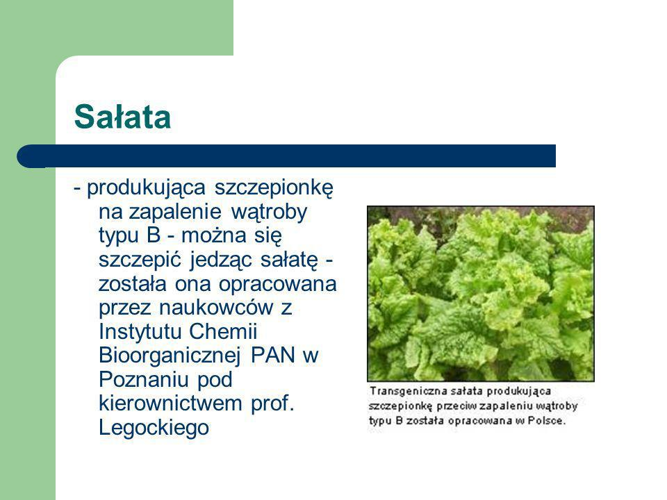 Soja - odporność na środki ochrony roślin na herbicydy, - odporność na wirusy, szkodniki, - obniżona zawartość kwasu palmitynowego.