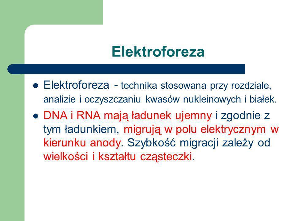Enzymy restrykcyjne Z kolei enzym EcoRI ze szczepu Escherichia coli rozpoznaje 6-nukleotydową sekwencję: 5' GAATTC 3' 3' CTTAAG 5' przecinając obie ni