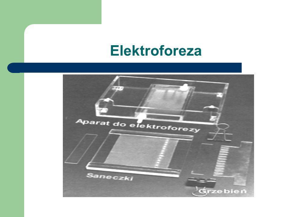 Elektroforeza Elektroforeza - technika stosowana przy rozdziale, analizie i oczyszczaniu kwasów nukleinowych i białek. DNA i RNA mają ładunek ujemny i
