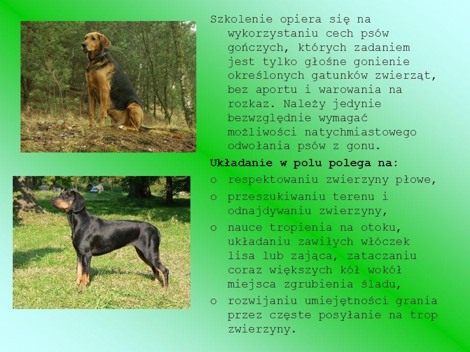 Szkolenie opiera się na wykorzystaniu cech psów gończych, których zadaniem jest tylko głośne gonienie określonych gatunków zwierząt, bez aportu i waro