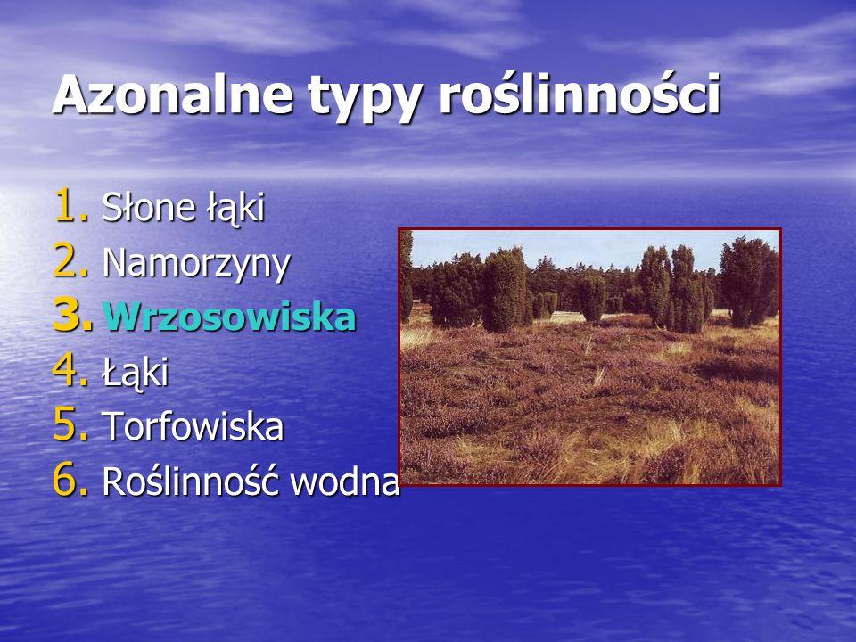 Azonalne typy roślinności 1.Słone łąki 2. Namorzyny 3.