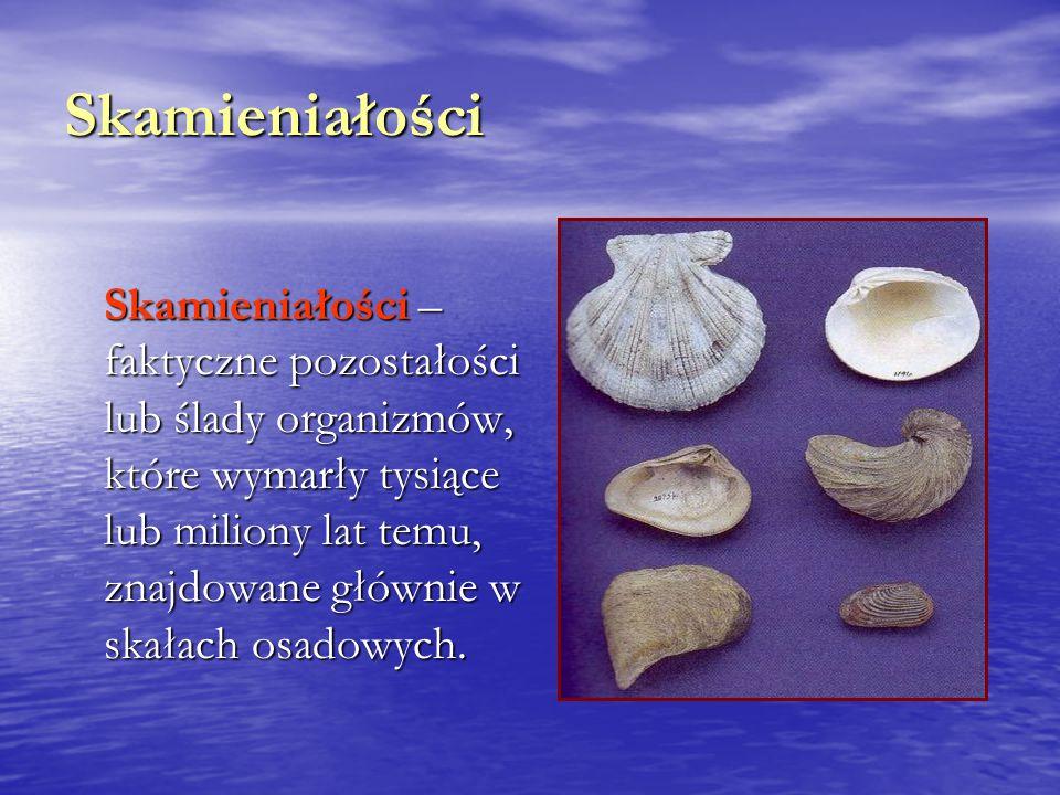 Skamieniałości Skamieniałości – faktyczne pozostałości lub ślady organizmów, które wymarły tysiące lub miliony lat temu, znajdowane głównie w skałach osadowych.