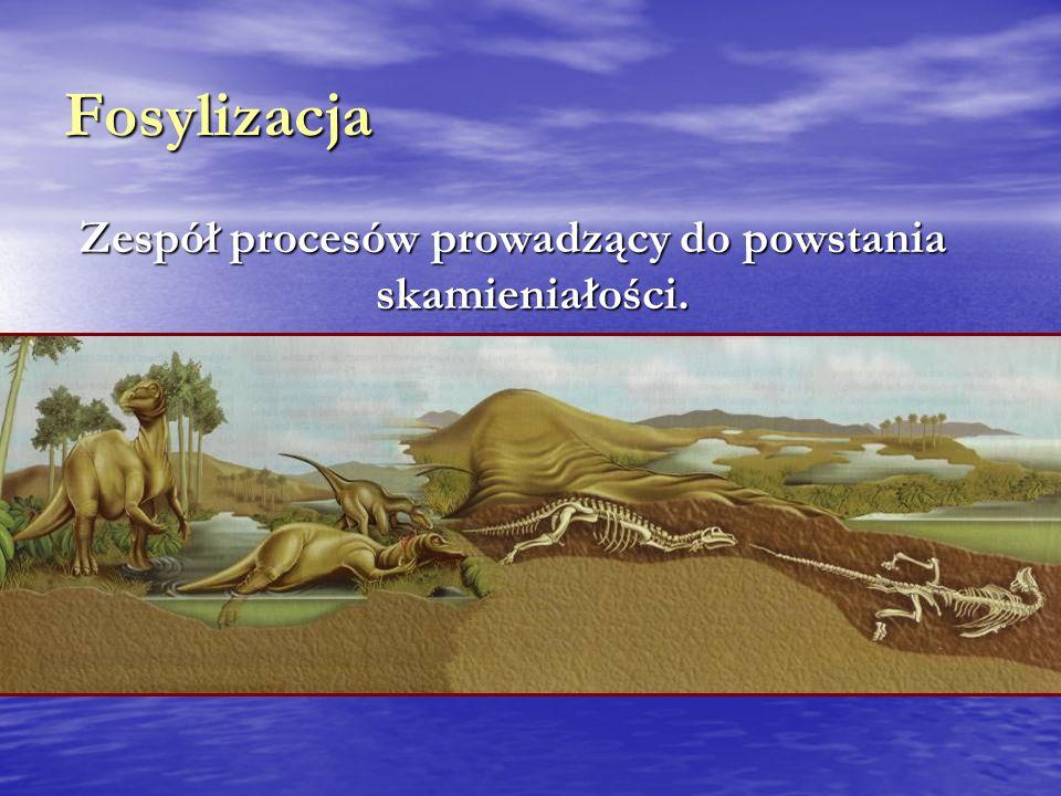 Fosylizacja Zespół procesów prowadzący do powstania skamieniałości.