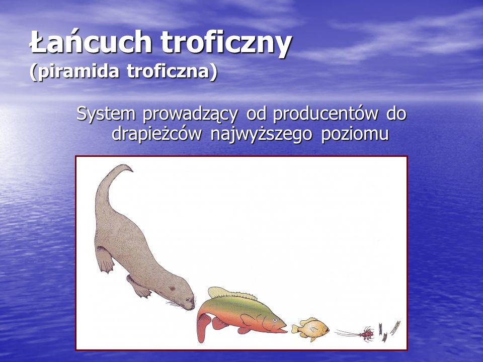 Łańcuch troficzny (piramida troficzna) System prowadzący od producentów do drapieżców najwyższego poziomu