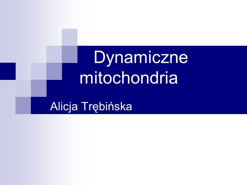 Dynamiczne mitochondria Alicja Trębińska