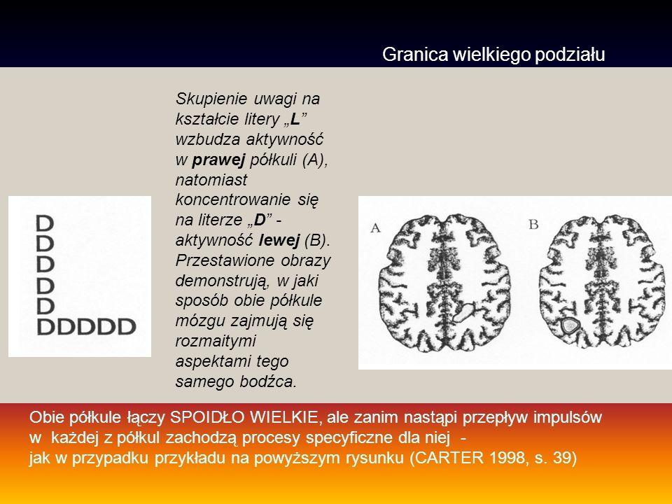 Rysunek 3.21 Specjalizacja półkul mózgowych Wg.Zimbardo P.G - Psychologia i życie.