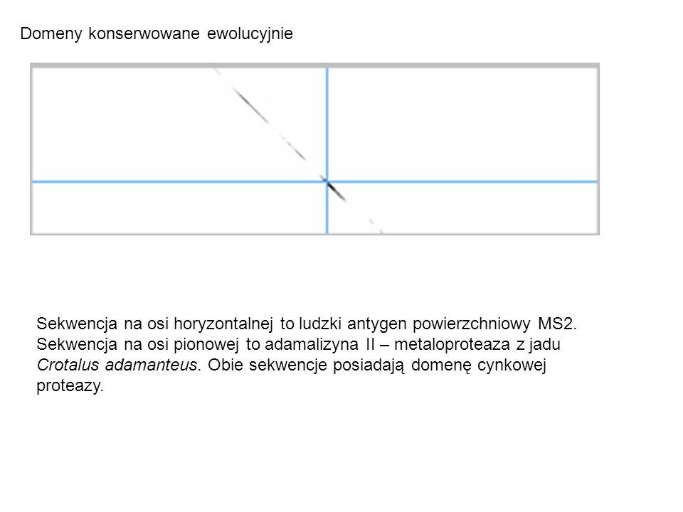 Domeny konserwowane ewolucyjnie Sekwencja na osi horyzontalnej to ludzki antygen powierzchniowy MS2. Sekwencja na osi pionowej to adamalizyna II – met