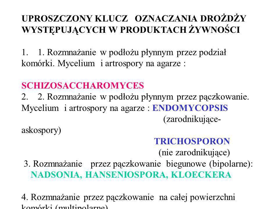 4.1.Obecność balistospor SPOROBOLOMYCES 4.2. Brak balistospor.