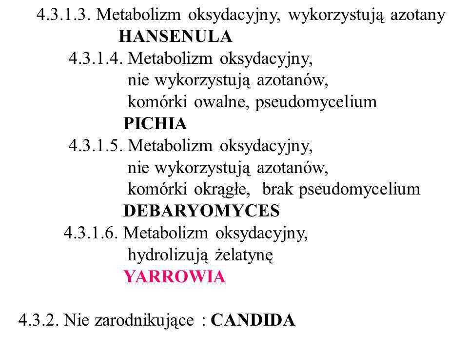 4.3.1.3.Metabolizm oksydacyjny, wykorzystują azotany HANSENULA 4.3.1.4.