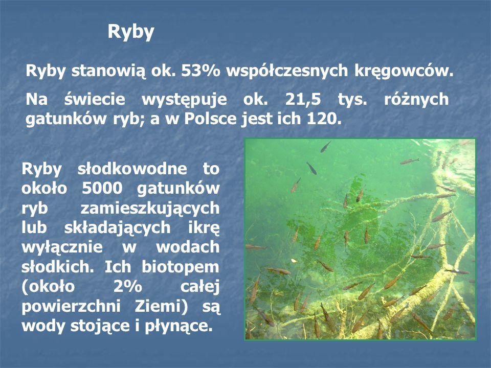 Ryby słodkowodne to około 5000 gatunków ryb zamieszkujących lub składających ikrę wyłącznie w wodach słodkich. Ich biotopem (około 2% całej powierzchn
