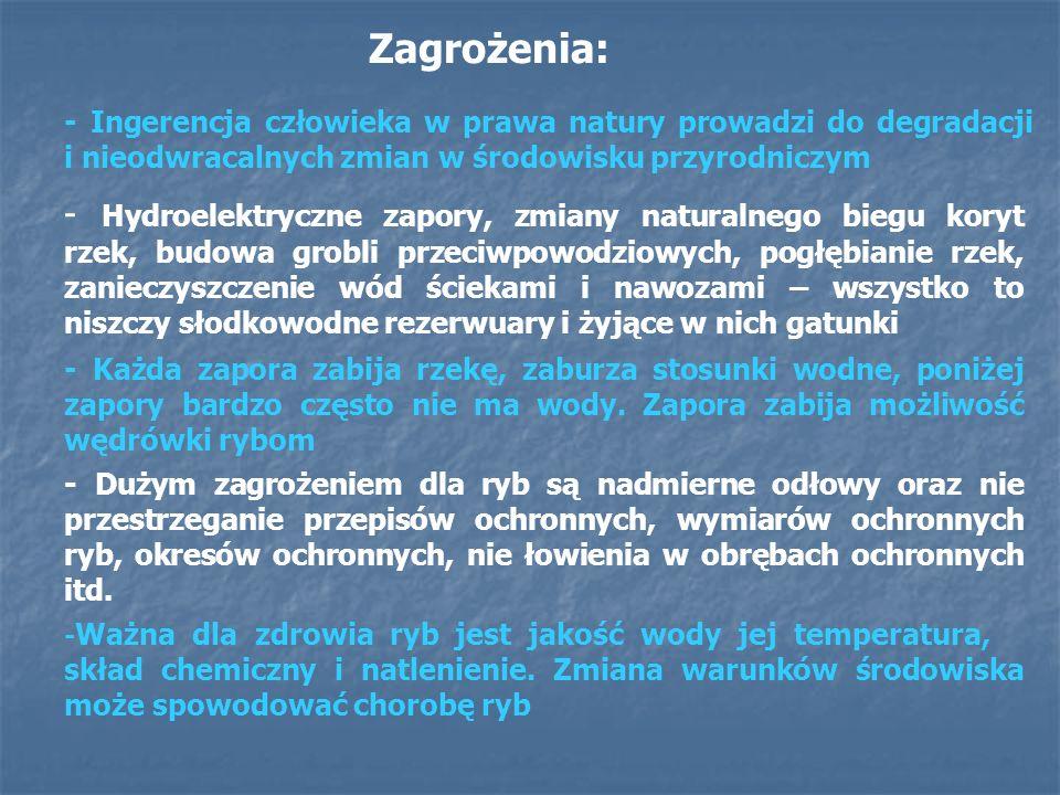Opracowanie: Monika Wrona Małgorzata Fornal Tłumaczenie: Justyna Niezgoda