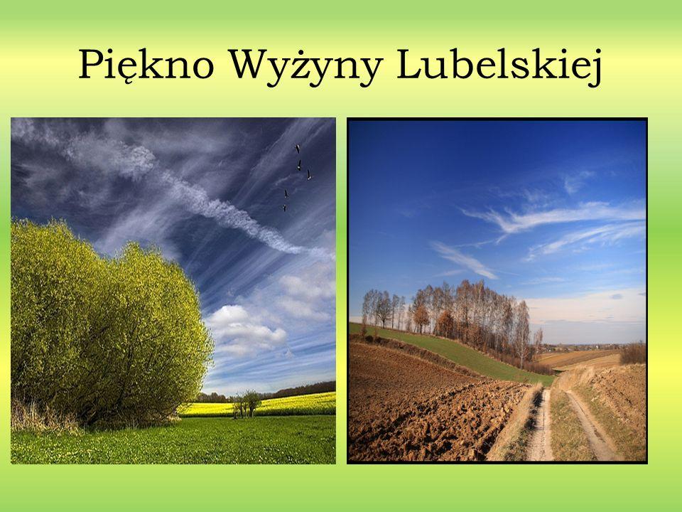 Stolica Województwa - Lublin Lublin to największe miasto w Polsce na wschód od Wisły, położone na niezwykle malowniczym terenie północnego skraju Wyżyny Lubelskiej, nad rzeką Bystrzycą, na wysokościach 163-238 m n.p.m.