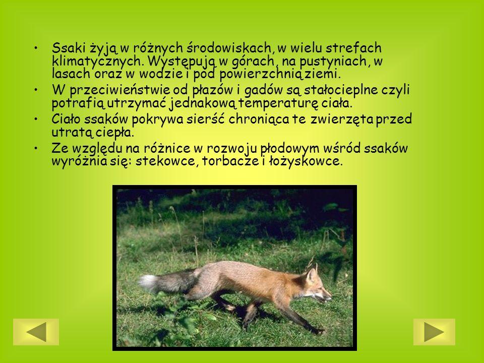 Ssaki żyją w różnych środowiskach, w wielu strefach klimatycznych. Występują w górach, na pustyniach, w lasach oraz w wodzie i pod powierzchnią ziemi.