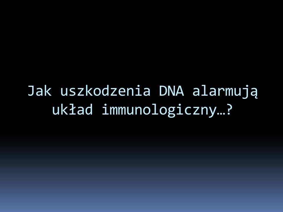 Jak uszkodzenia DNA alarmują układ immunologiczny…?