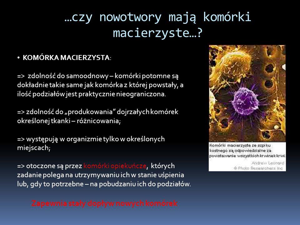 …czy nowotwory mają komórki macierzyste….