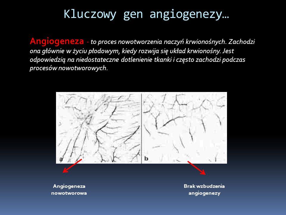 Kluczowy gen angiogenezy… Angiogeneza - to proces nowotworzenia naczyń krwionośnych.