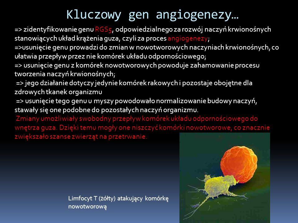 => zidentyfikowanie genu RGS5, odpowiedzialnego za rozwój naczyń krwionośnych stanowiących układ krążenia guza, czyli za proces angiogenezy; =>usunięcie genu prowadzi do zmian w nowotworowych naczyniach krwionośnych, co ułatwia przepływ przez nie komórek układu odpornościowego; => usunięcie genu z komórek nowotworowych powoduje zahamowanie procesu tworzenia naczyń krwionośnych; => jego działanie dotyczy jedynie komórek rakowych i pozostaje obojętne dla zdrowych tkanek organizmu => usunięcie tego genu u myszy powodowało normalizowanie budowy naczyń, stawały się one podobne do pozostałych naczyń organizmu.