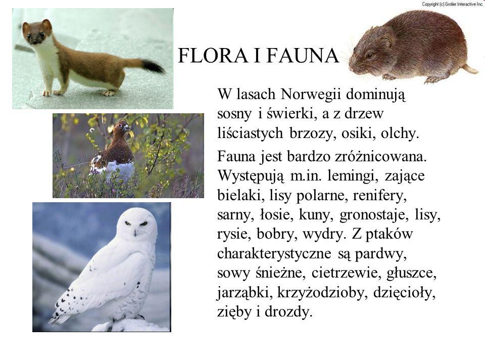 FLORA I FAUNA W lasach Norwegii dominują sosny i świerki, a z drzew liściastych brzozy, osiki, olchy. Fauna jest bardzo zróżnicowana. Występują m.in.