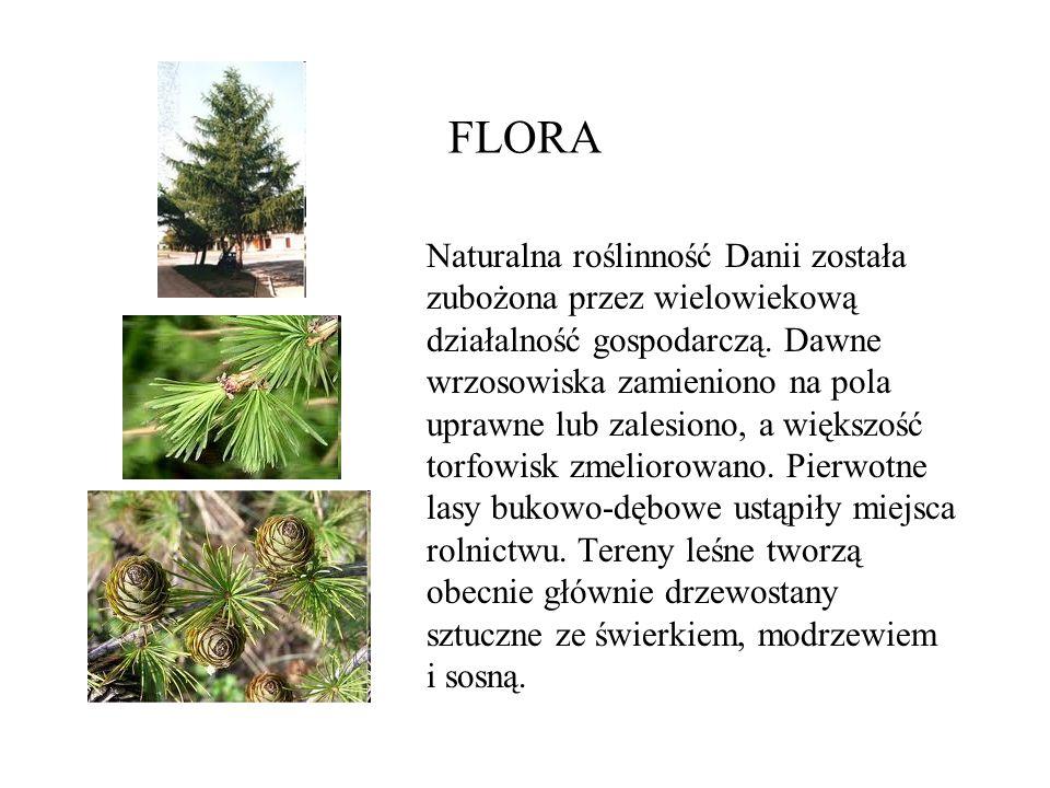 FLORA Naturalna roślinność Danii została zubożona przez wielowiekową działalność gospodarczą. Dawne wrzosowiska zamieniono na pola uprawne lub zalesio