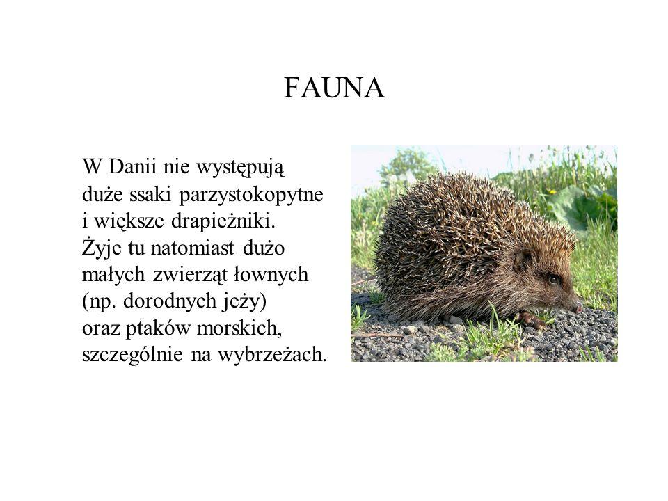 FAUNA W Danii nie występują duże ssaki parzystokopytne i większe drapieżniki. Żyje tu natomiast dużo małych zwierząt łownych (np. dorodnych jeży) oraz