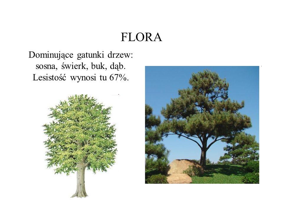 FAUNA Fauna wykazuje ścisły związek z roślinnością.