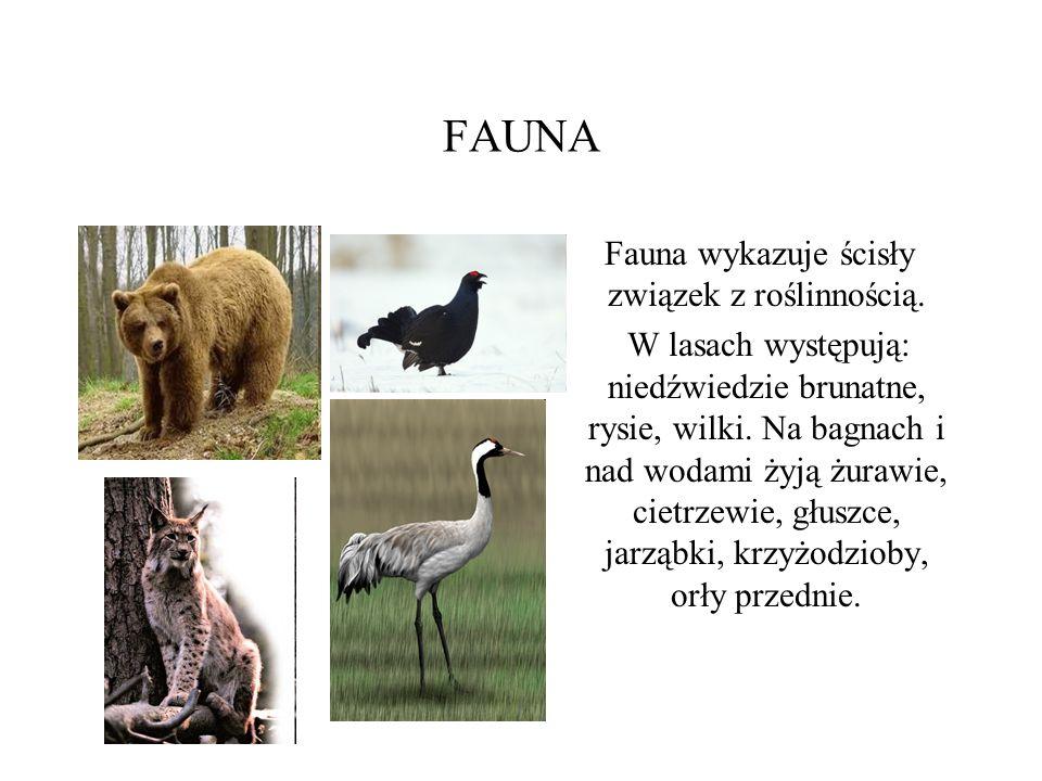 FAUNA Fauna wykazuje ścisły związek z roślinnością. W lasach występują: niedźwiedzie brunatne, rysie, wilki. Na bagnach i nad wodami żyją żurawie, cie
