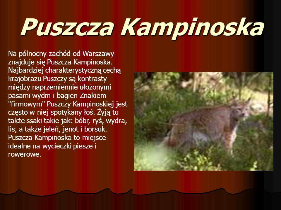 Puszcza Kampinoska Na północny zachód od Warszawy znajduje się Puszcza Kampinoska. Najbardziej charakterystyczną cechą krajobrazu Puszczy są kontrasty