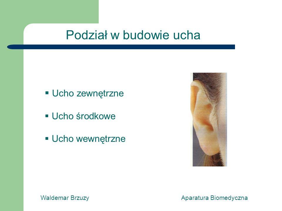 Waldemar Brzuzy Aparatura Biomedyczna Podział w budowie ucha Ucho zewnętrzne Ucho środkowe Ucho wewnętrzne