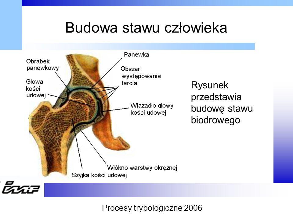 Rodzaje tarcia w stawach człowieka Tarcie Tarcie zewnętrzneTarcie wewnętrzne StatyczneDynamiczne SpoczynkoweKinematyczne Poślizgowe Toczne Wiertne Procesy trybologiczne 2006
