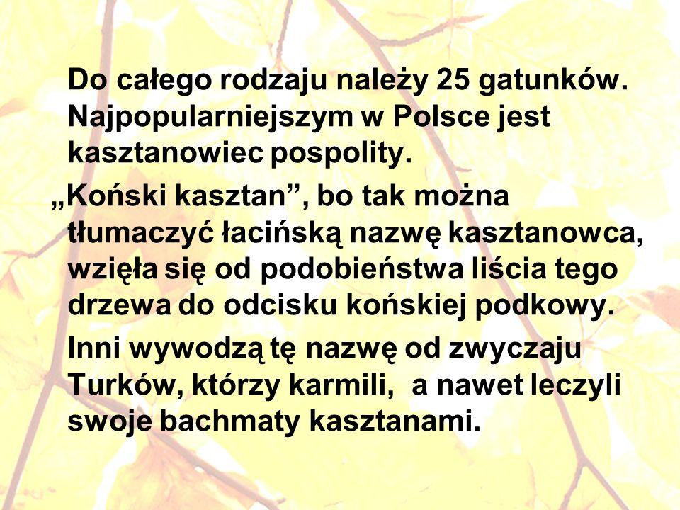 Do całego rodzaju należy 25 gatunków. Najpopularniejszym w Polsce jest kasztanowiec pospolity. Koński kasztan, bo tak można tłumaczyć łacińską nazwę k