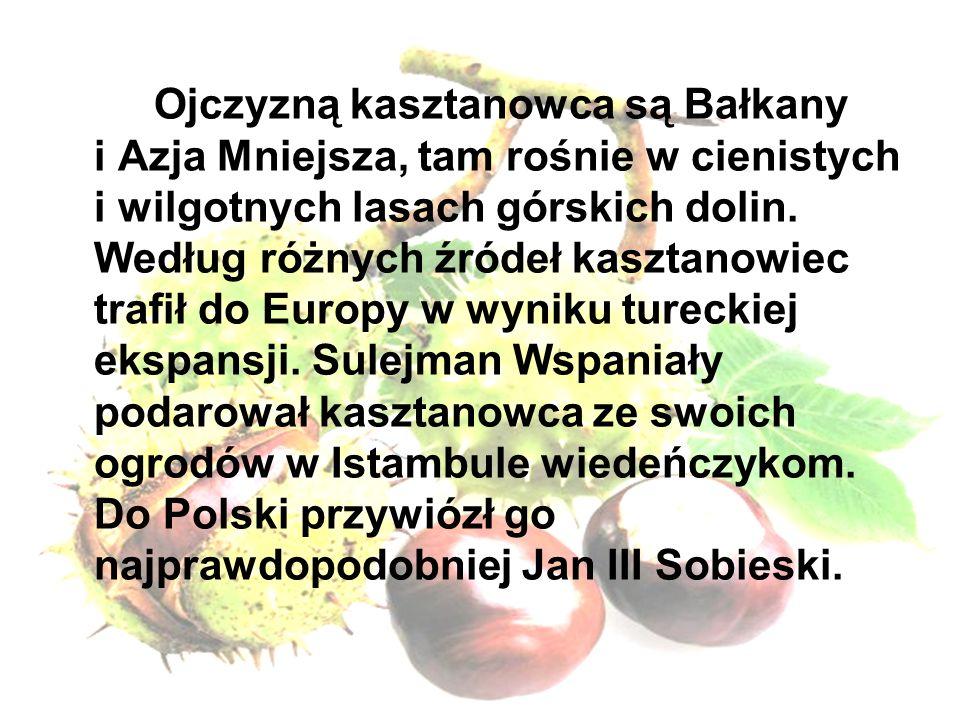 Ojczyzną kasztanowca są Bałkany i Azja Mniejsza, tam rośnie w cienistych i wilgotnych lasach górskich dolin. Według różnych źródeł kasztanowiec trafił