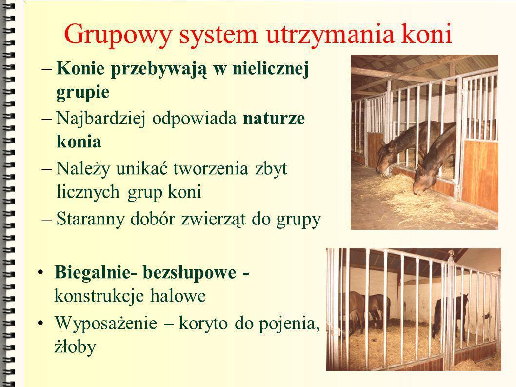 Grupowy system utrzymania koni –Konie przebywają w nielicznej grupie –Najbardziej odpowiada naturze konia –Należy unikać tworzenia zbyt licznych grup