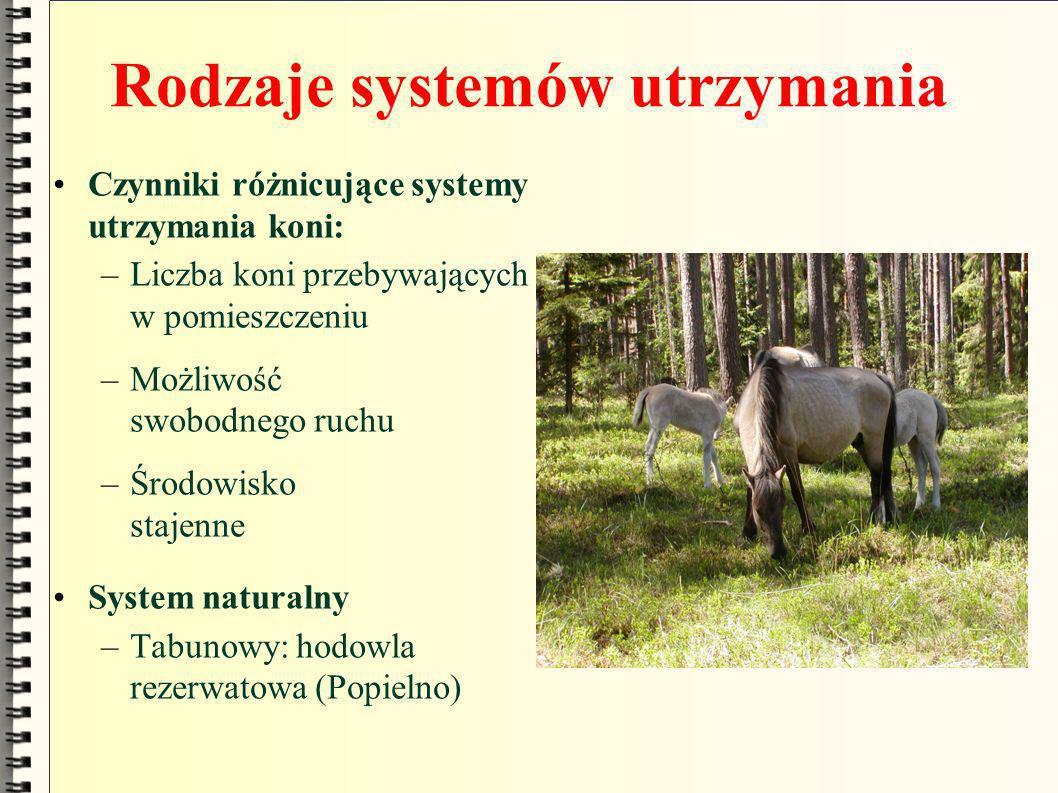 Rodzaje systemów utrzymania Czynniki różnicujące systemy utrzymania koni: –Liczba koni przebywających w pomieszczeniu –Możliwość swobodnego ruchu –Śro