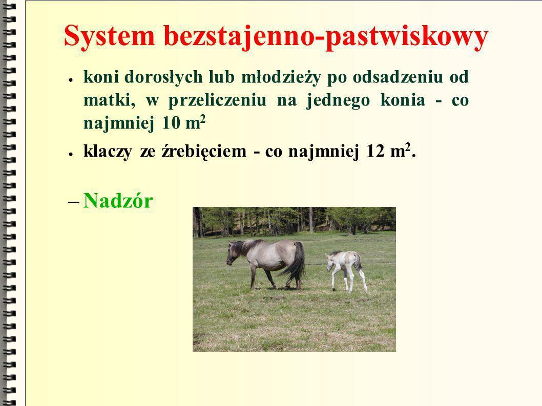 System bezstajenno-pastwiskowy koni dorosłych lub młodzieży po odsadzeniu od matki, w przeliczeniu na jednego konia - co najmniej 10 m 2 klaczy ze źre