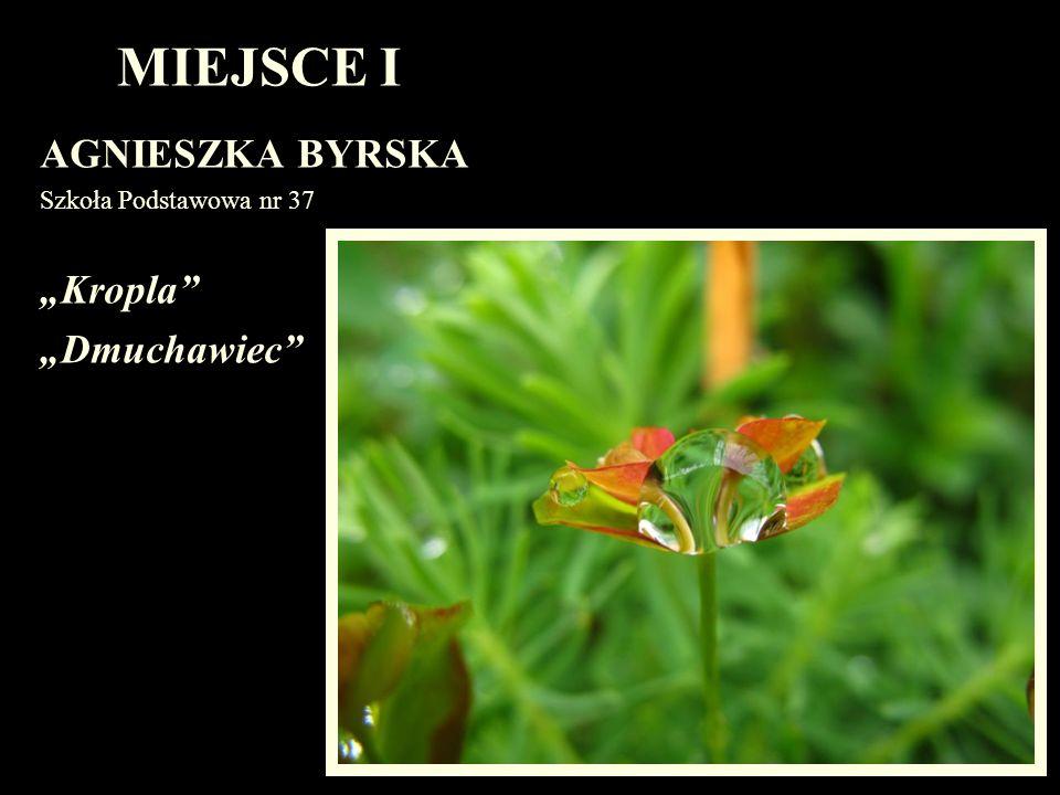 MIEJSCE I AGNIESZKA BYRSKA Szkoła Podstawowa nr 37 Kropla Dmuchawiec