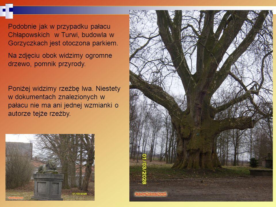 Podobnie jak w przypadku pałacu Chłapowskich w Turwi, budowla w Gorzyczkach jest otoczona parkiem. Na zdjęciu obok widzimy ogromne drzewo, pomnik przy