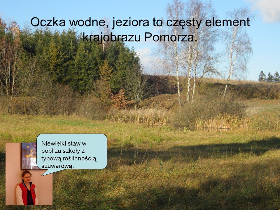 Oczka wodne, jeziora to częsty element krajobrazu Pomorza. Niewielki staw w pobliżu szkoły z typową roślinnością szuwarową.
