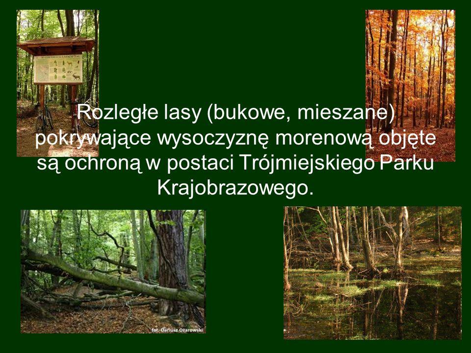 Rozległe lasy (bukowe, mieszane) pokrywające wysoczyznę morenową objęte są ochroną w postaci Trójmiejskiego Parku Krajobrazowego.