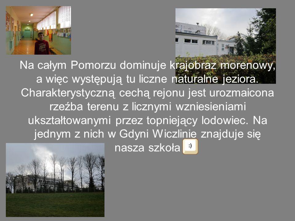 Wzniesienia morenowe najczęściej pokrywają lasy sosnowe. Zdjęcie przedstawia okolicę naszej szkoły