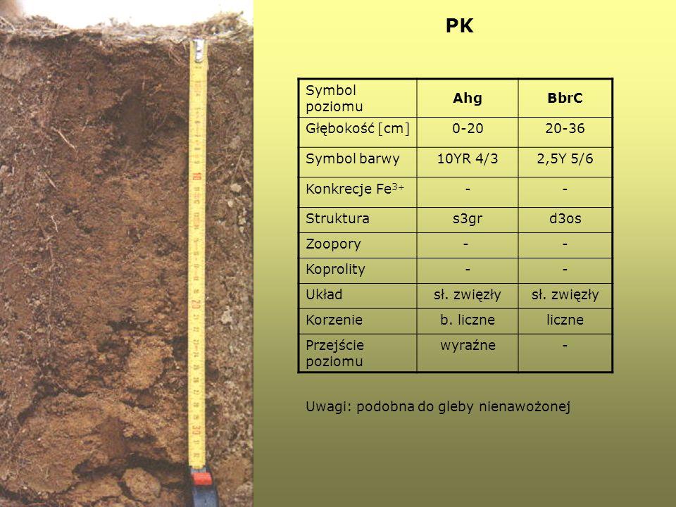 PK Symbol poziomu AhgBbrC Głębokość [cm]0-2020-36 Symbol barwy10YR 4/32,5Y 5/6 Konkrecje Fe 3 + -- Strukturas3grd3os Zoopory- - Koprolity-- Układsł. z