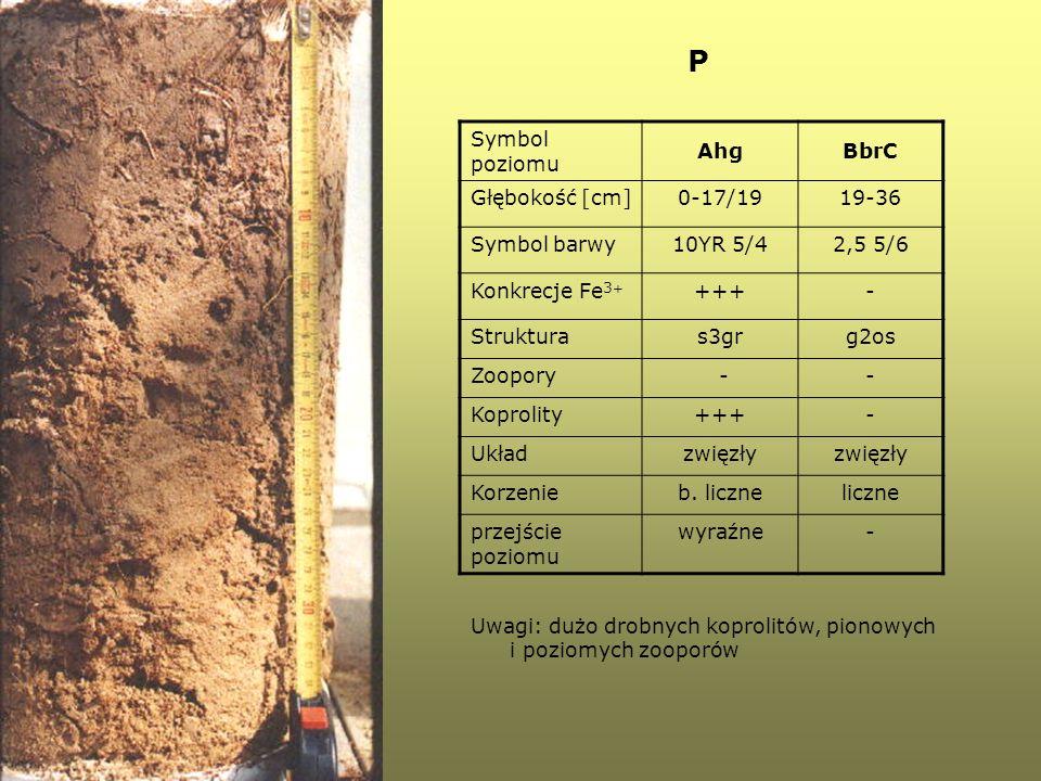 P Symbol poziomu AhgBbrC Głębokość [cm]0-17/1919-36 Symbol barwy10YR 5/42,5 5/6 Konkrecje Fe 3 + +++- Strukturas3grg2os Zoopory -- Koprolity+++- Układ