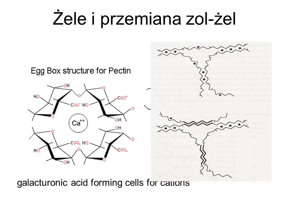 Żele i przemiana zol-żel galacturonic acid forming cells for cations