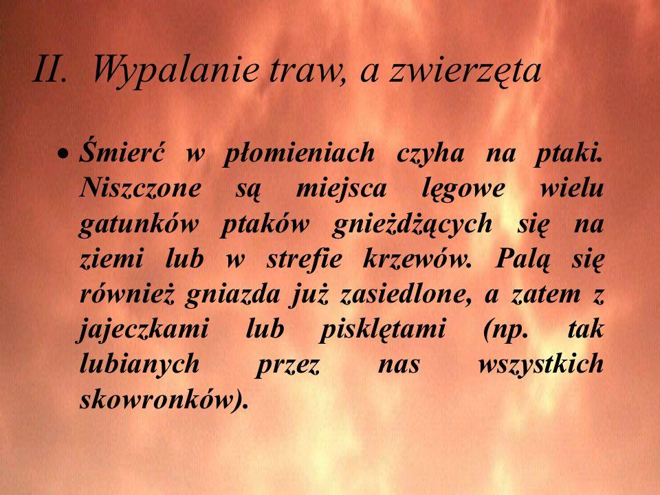 II. Wypalanie traw, a zwierzęta Śmierć w płomieniach czyha na ptaki.